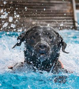 Pools kaufen: Große Auswahl an Aufstell- und eingelassenen Pools