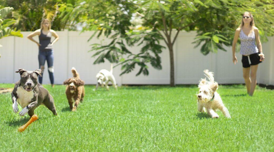 Spielende Hunde in der Hundeschule Vier Pfoten
